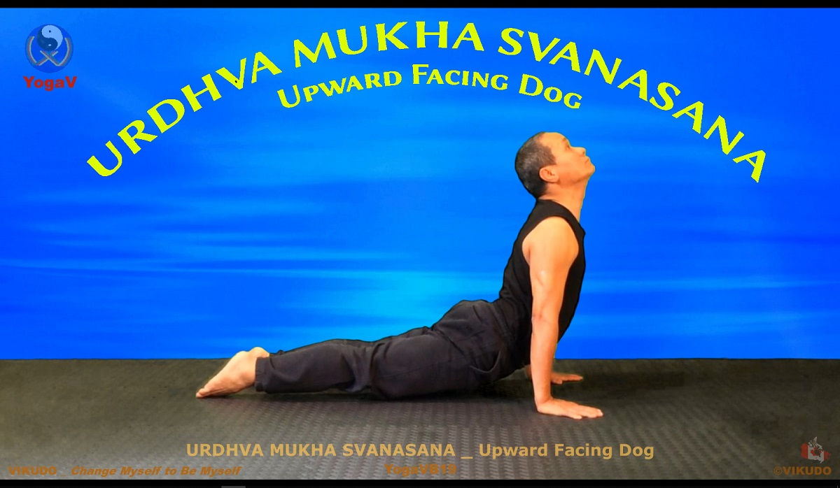 Yoga vikudo, yogav, vikudo, Upward Facing Dog