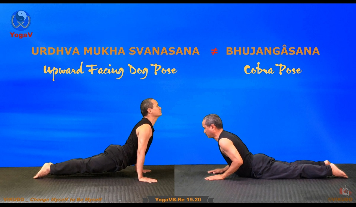 Yoga vikudo, yogav, vikudo, cobra pose, Upward Facing Dog